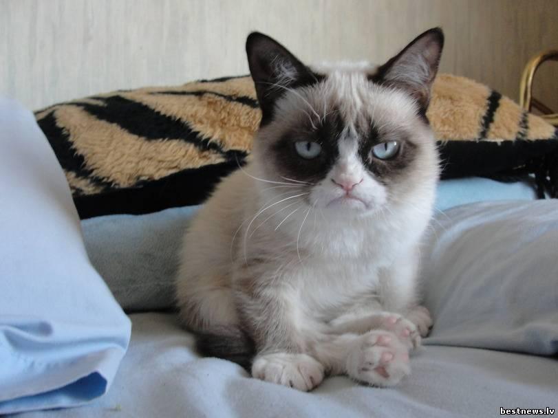 Посмотреть новость Участие кота в выборах