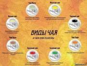 Разновидности чая и чем они полезны