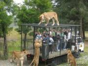 Прогулка в зоопарке Orana Wildlife Park, Новая Зеландия
