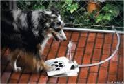 Специальный питьевой фонтан для собаки