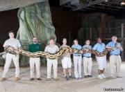 Самый длинный питон в мире, которого зовут Пушистик, его длина 7,3 метра.