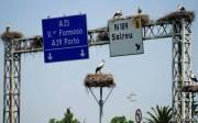 Видимо, аистам понравился дорожный указатель недалеко от Авейро, Португалия.